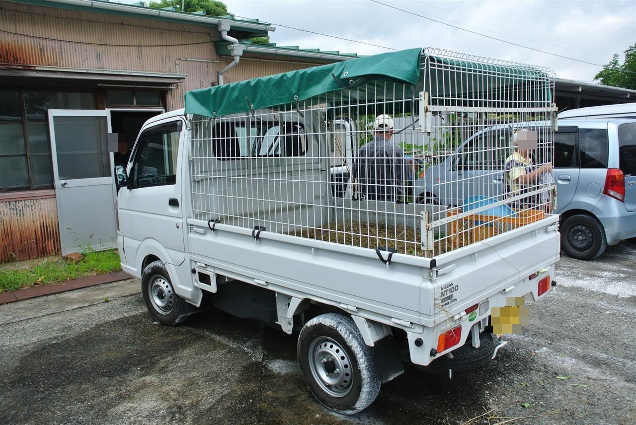 Kei truck in Georgia showing how you can use the truck for livestock.